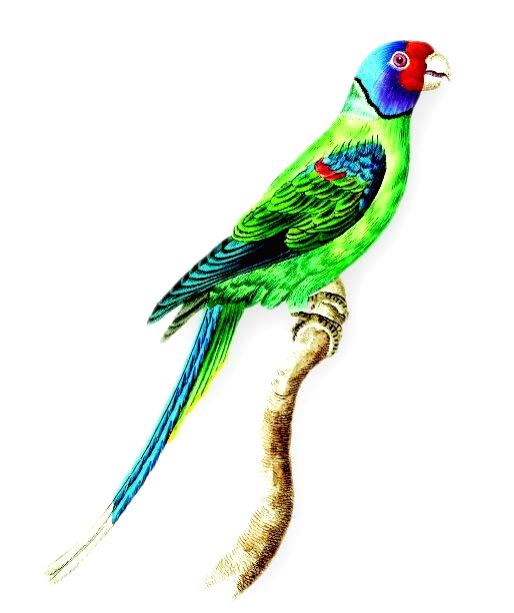 """An image of a parrot from """"Every Creature Has a Story""""."""