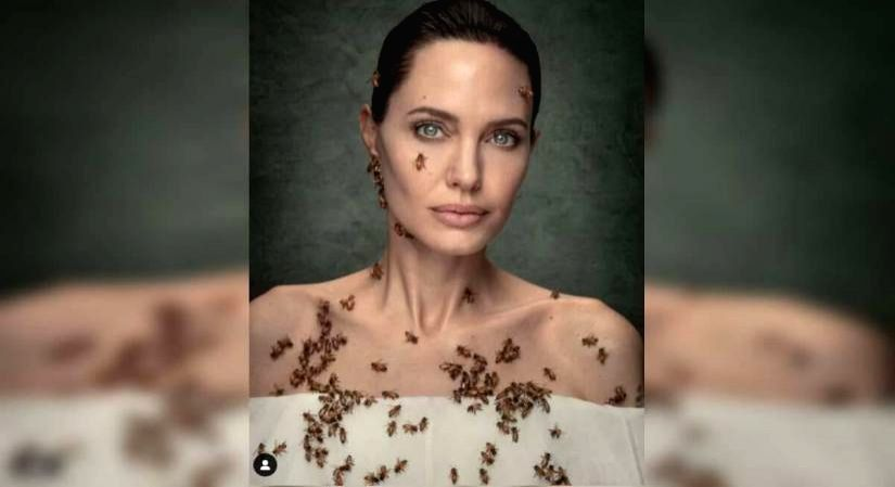 Angelina Jolie's 'bee' story.(photo:IANSLIFE)