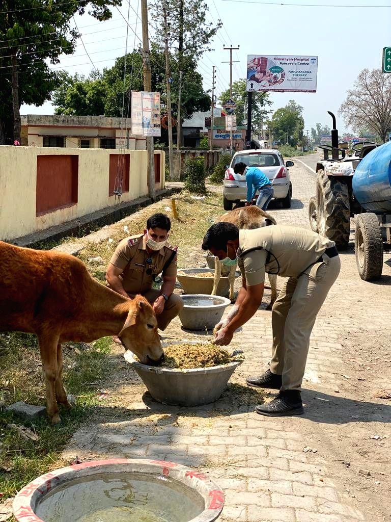 Animals being fed by police near Dehradun's Rani Pokhari police station.