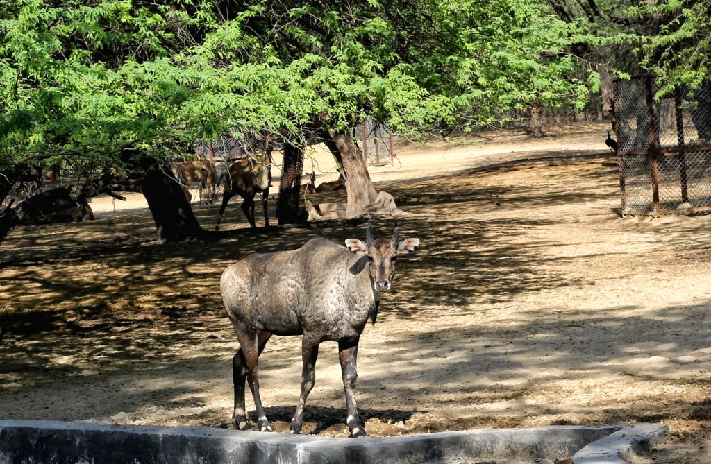 Animals of Delhi Zoo during the Media priview of on occasion of World Wildlife Day at National Zoological Park in new Delhi.Photo Wasim Sarvar