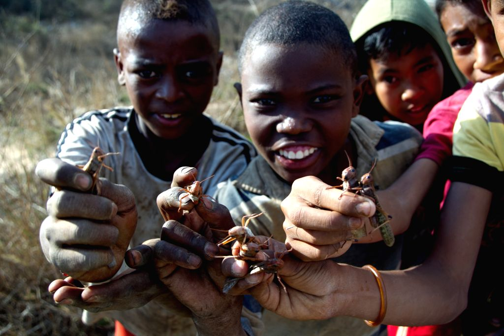 Childern show locust in Madagascars, capital of Antananarivo, Aug. 28, 2014. A locust invasion took place in Antananarivo on Thursday.