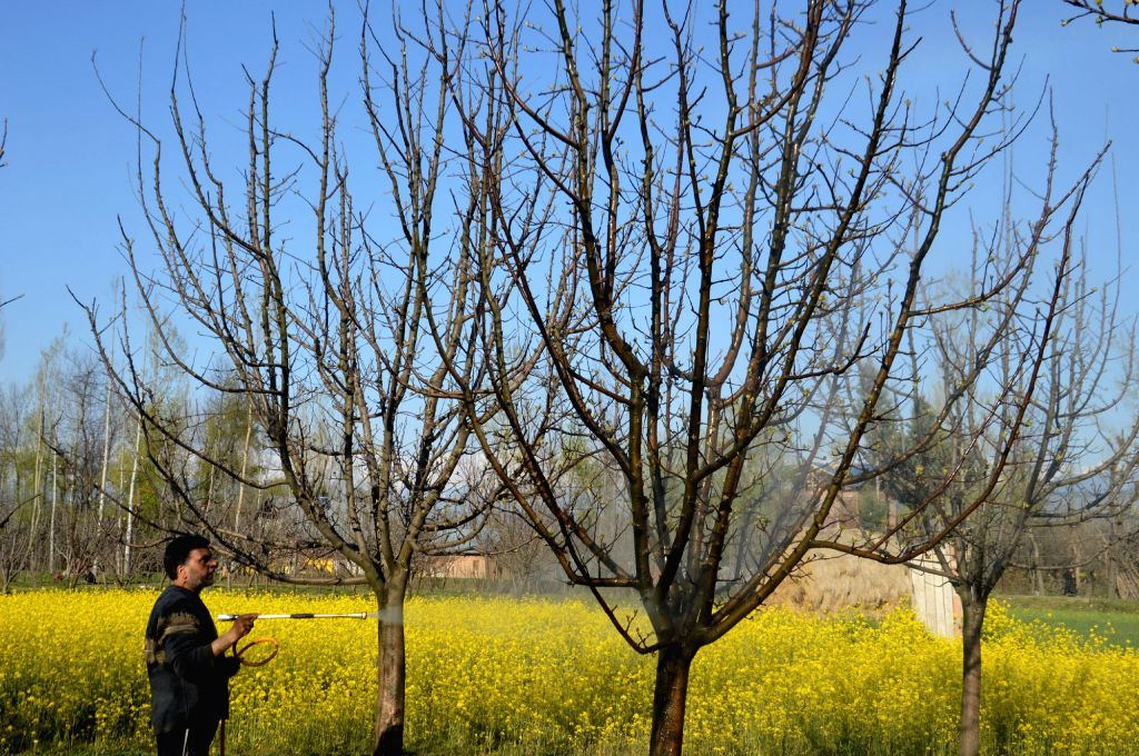 Apple tree. (File Photo: IANS)