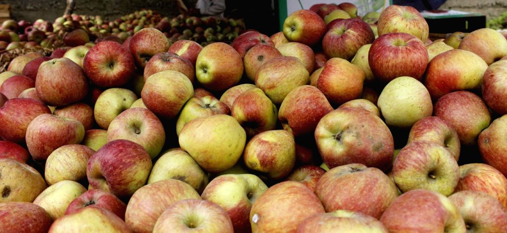 Apples. (File Photo: IANS)