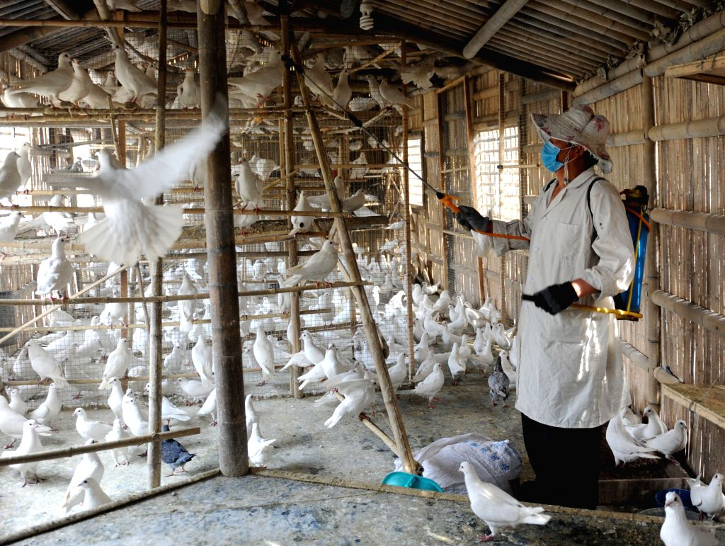 April 15, 2013 - Zhengzhou, China - A worker sprays disinfectant on pigeon houses at Zijingshan Park Monday. About 3,000 pigeons in the area which used to be bred outside have been confined to cages recently due to the H7N9 bird flu. Measure like dai