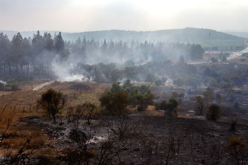 ARARA (ISRAEL), July 17, 2019 The photo taken on July 17, 2019 shows a burnt area following a wildfire in the Arab town of Arara in northern Israel. Wildfires broke out at several ...