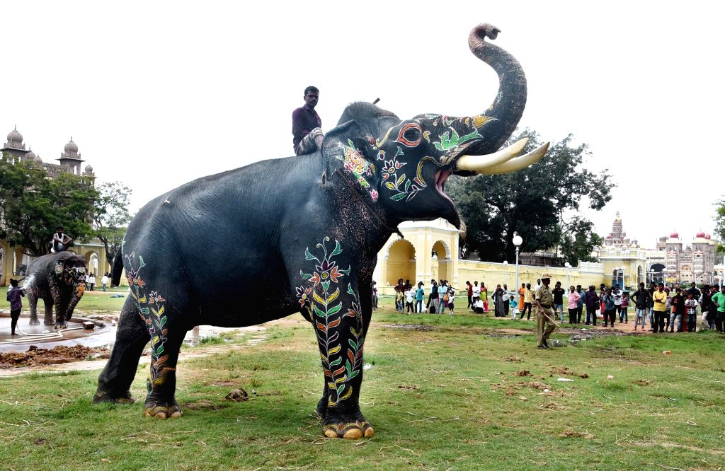 Arjuna, the 59-year old Dasara elephant that has been carrying the 'Golden Howdah' since 2012, with its mahout post the inauguration of Jumboo Savari, in Mysuru on Oct 9, 2019.