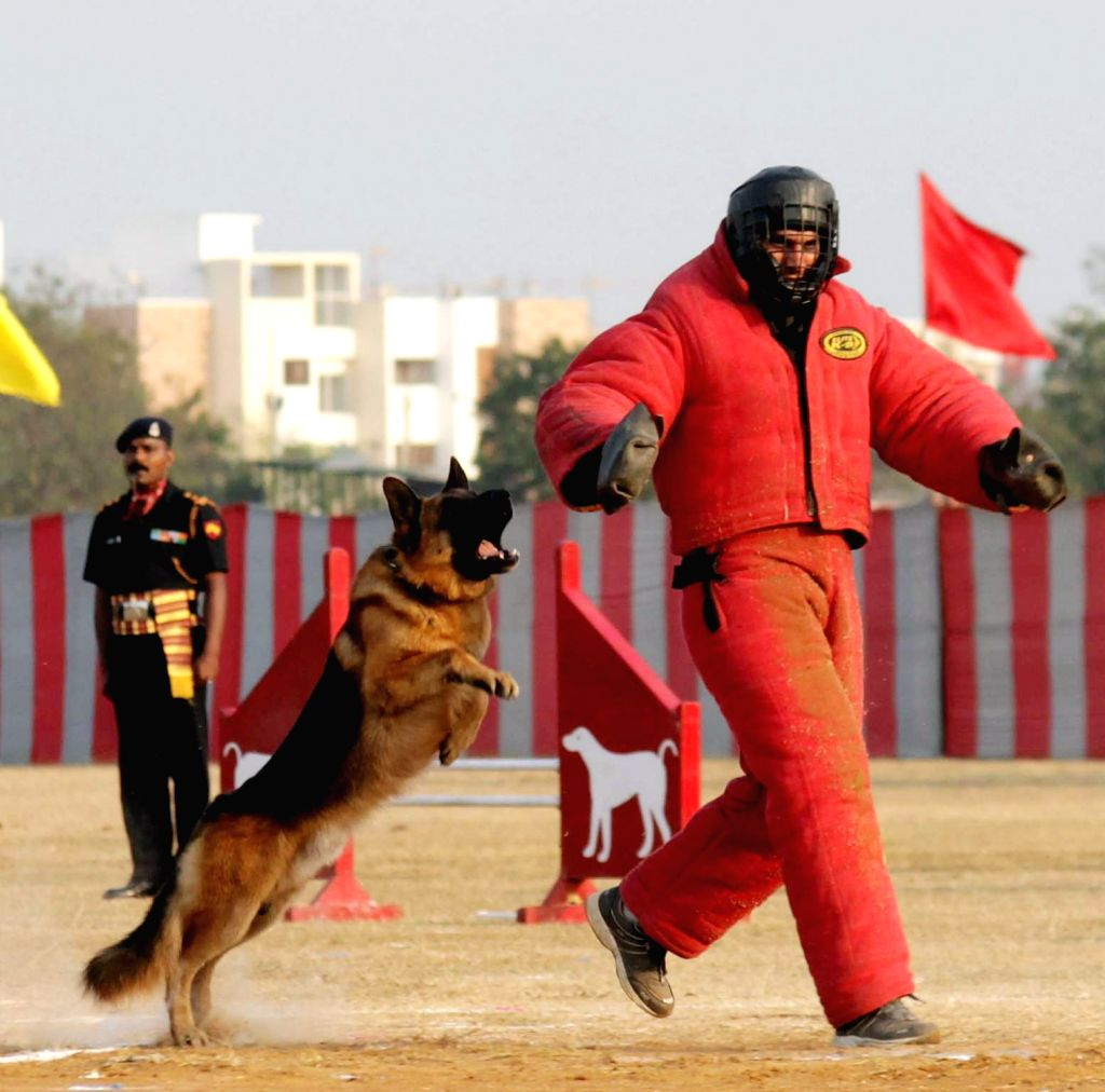 Army personnel with their dogs during a Combined Display organised as part of end of term activities at Officers Training Academy in Chennai, on March 10, 2017.