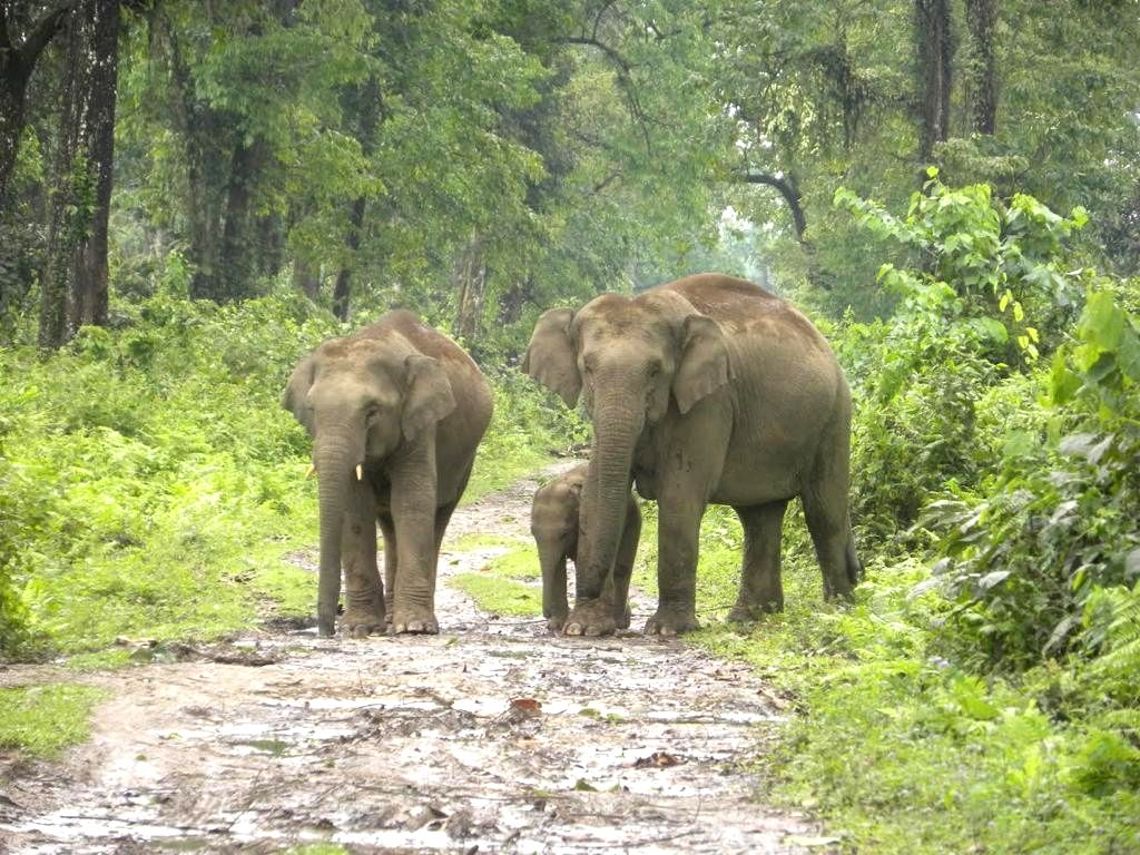 Assam 2nd state in India to have 7 National Parks after MP