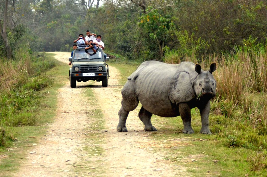Tourists click pictures of a Rhinoceros at the Kaziranga National Park in Assam, on March 3, 2015.