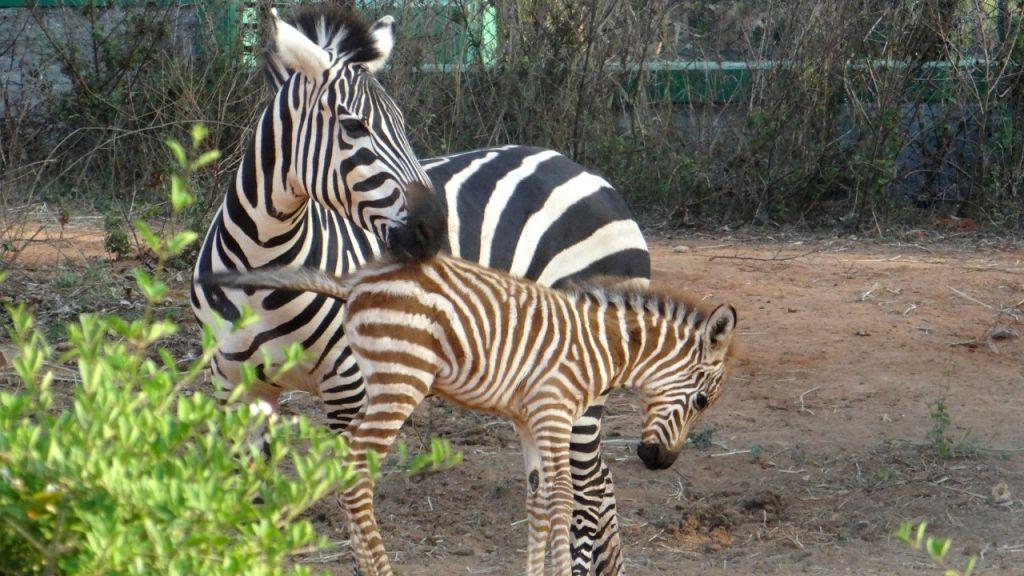 "B'LORE ON: ""Cash-strapped Bengaluru zoo???s plea to adopt animals"":"