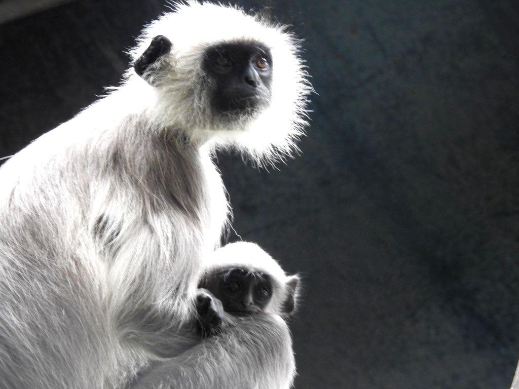 "B'LORE ON: ""Cash-strapped Bengaluru zoo's plea to adopt animals"":"