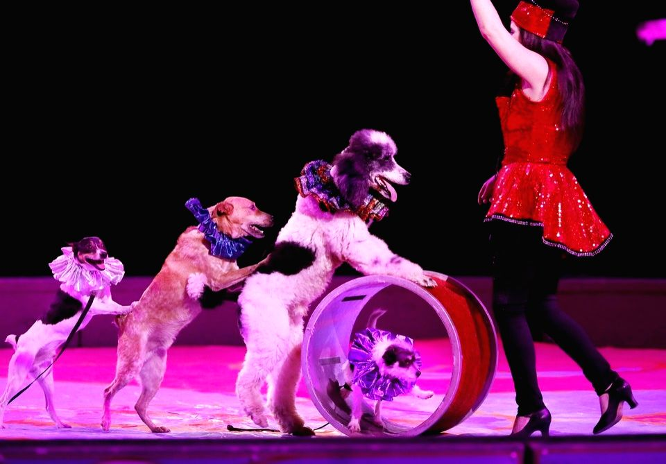 Ban use of animals in circuses to prevent spread of disease: PETA.