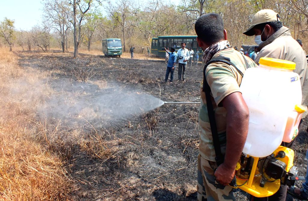Bandipur: The fire that had engulfed the forests of the Bandipur Tiger Reserve of Karnataka which had been raging for five long days was finally doused, on Feb 26, 2019. (Photo: IANS)