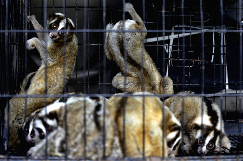 BANDUNG, Oct. 19, 2016 - Javan slow loris rescued from illegal smuggling wait to receive medical treatment by doctors from International Animal Rescue (IAR) in Bandung, Indonesia, Oct. 18, 2016. The ...