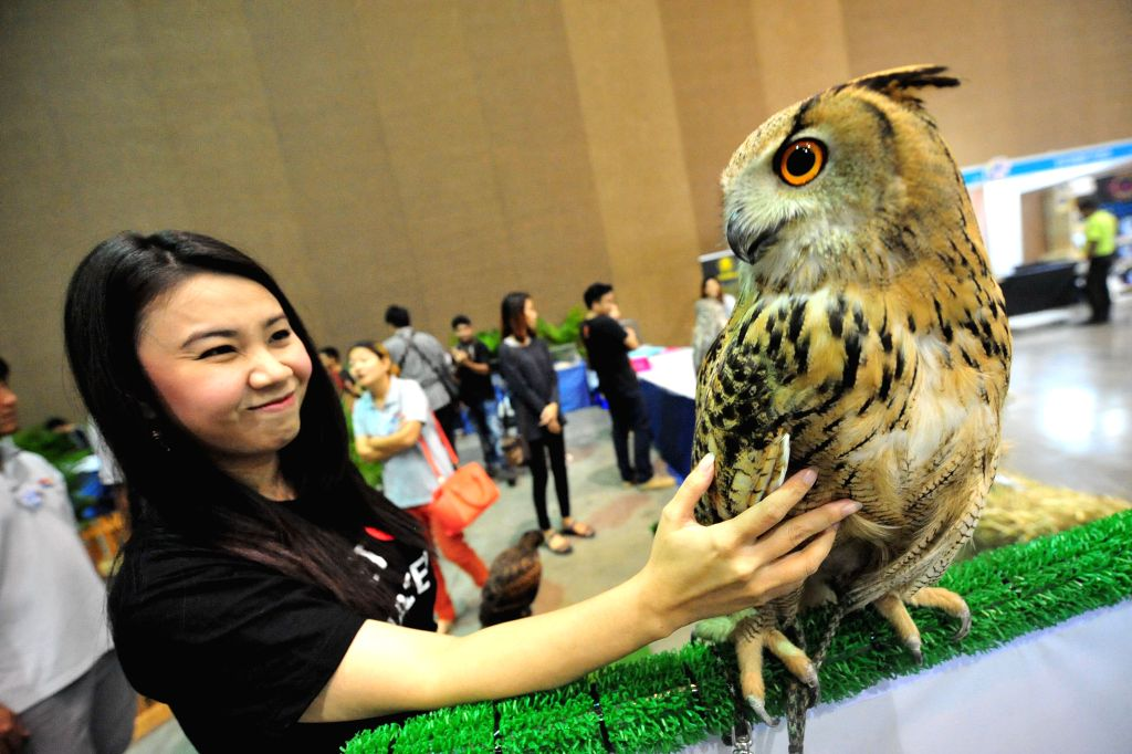 A woman looks at an Eurasian Eagle Owl during the exhibition of Pet Variety And The City 2014 at Impact Muang Thong Thani in Bangkok, Thailand, Nov. 20, 2014. The exhibition is held here ...
