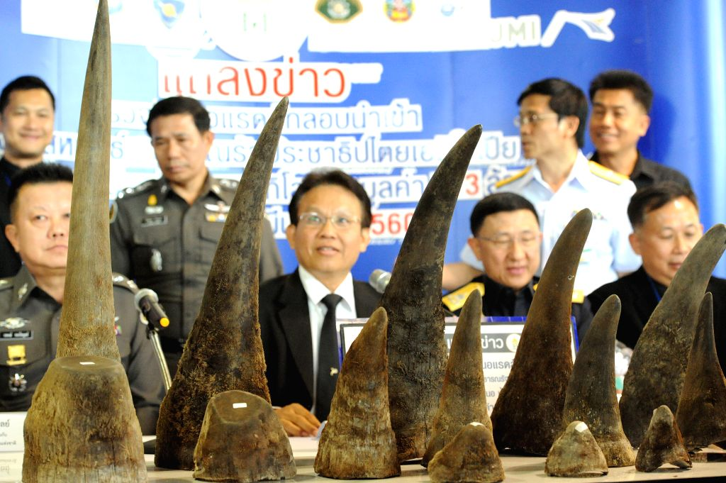 BANGKOK, March 14, 2017 - Customs officials demonstrate seized rhinoceros horns during a press briefing at Suvarnabhumi Airport in Bangkok, Thailand, March 14, 2017. The Thai customs recently seized ...