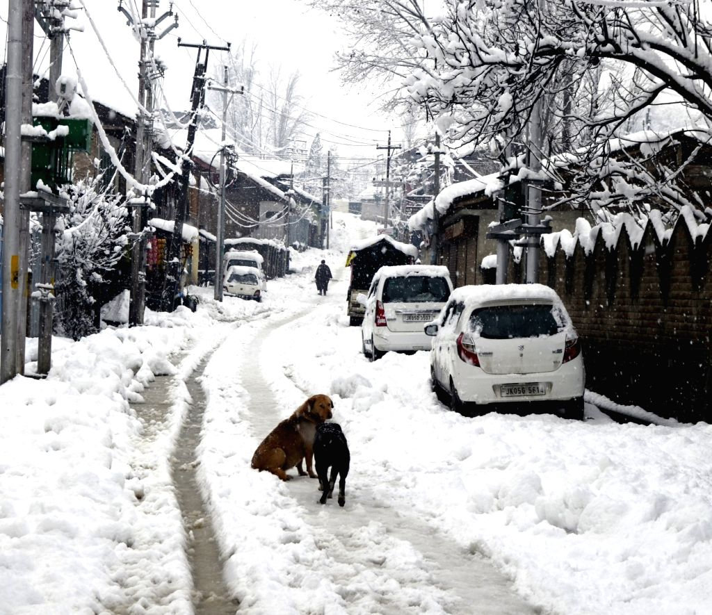 Baramulla: Jammu and Kashmir's Baramulla receives fresh snowfall, on Feb 7, 2019. (Photo: IANS)