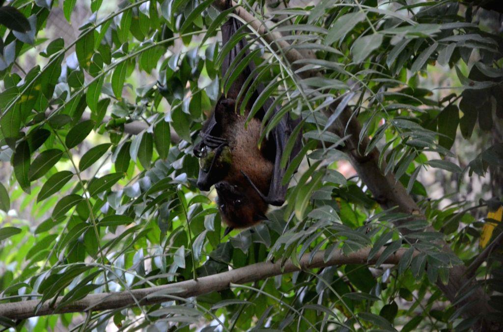 Bat. (File Photo: IANS)