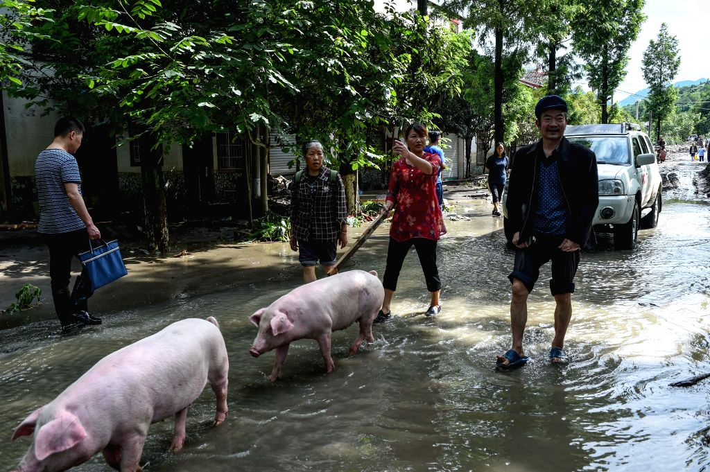 BEICHUAN, July 12, 2018 - Villagers retrieve their lost pigs after the flood in Chenjiaba Town of Beichuan County, southwest China's Sichuan Province, July 12, 2018. Lasting torrentials in the past ...