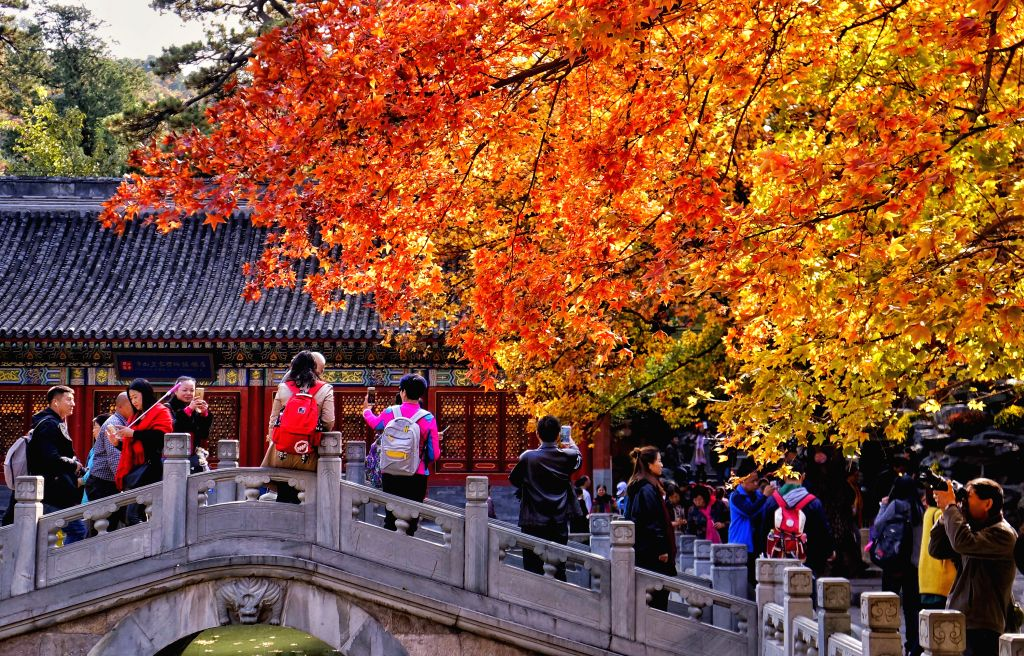 BEIJING, Oct. 26, 2016 - Tourists view red leaves at Xiangshan park in Beijing, capital of China, Oct. 26, 2016. The autumn scenery in Xiangshan attracts lots of tourists each year.