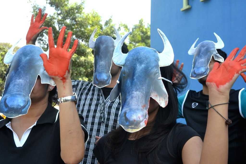 Activists of the Ethocal Treatment of animals held a protest demonstration for Buffalo and Bulls against Cruel Kambala Races, in Bengaluru on Dec. 6, 2014.