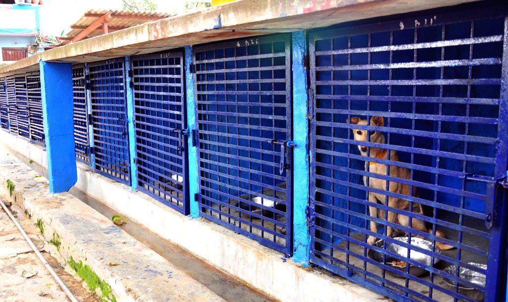 Bengaluru Mayor Shantakumari and Deputy Mayor Ranganna inspect a veterinary hospital in Bengaluru, on Dec 10, 2014.