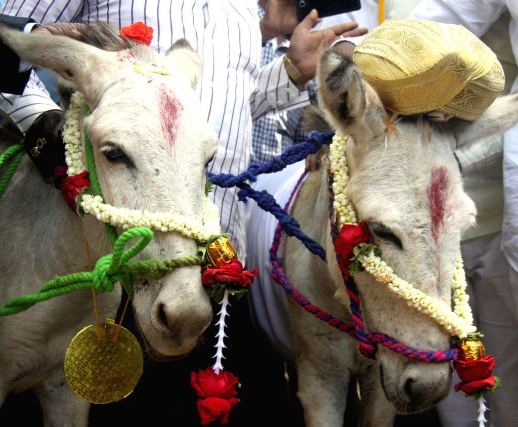 Kannada Chalavali Vatal Paksha workers led by their chief Vatal Nagaraj celebrate Valentine`s Day by getting a pair of donkeys married in Bengaluru on Feb 14, 2015.