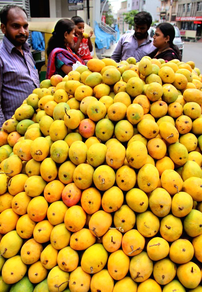 Mangoes arrive in Bengaluru markets, on May 4, 2015.
