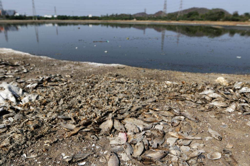 Bengaluru, May 31 (IANS) As many as 8,000 fish died in a city lake due to lack of maintenance and release of sewage water into it, an official said on Sunday.(File Photo: IANS)