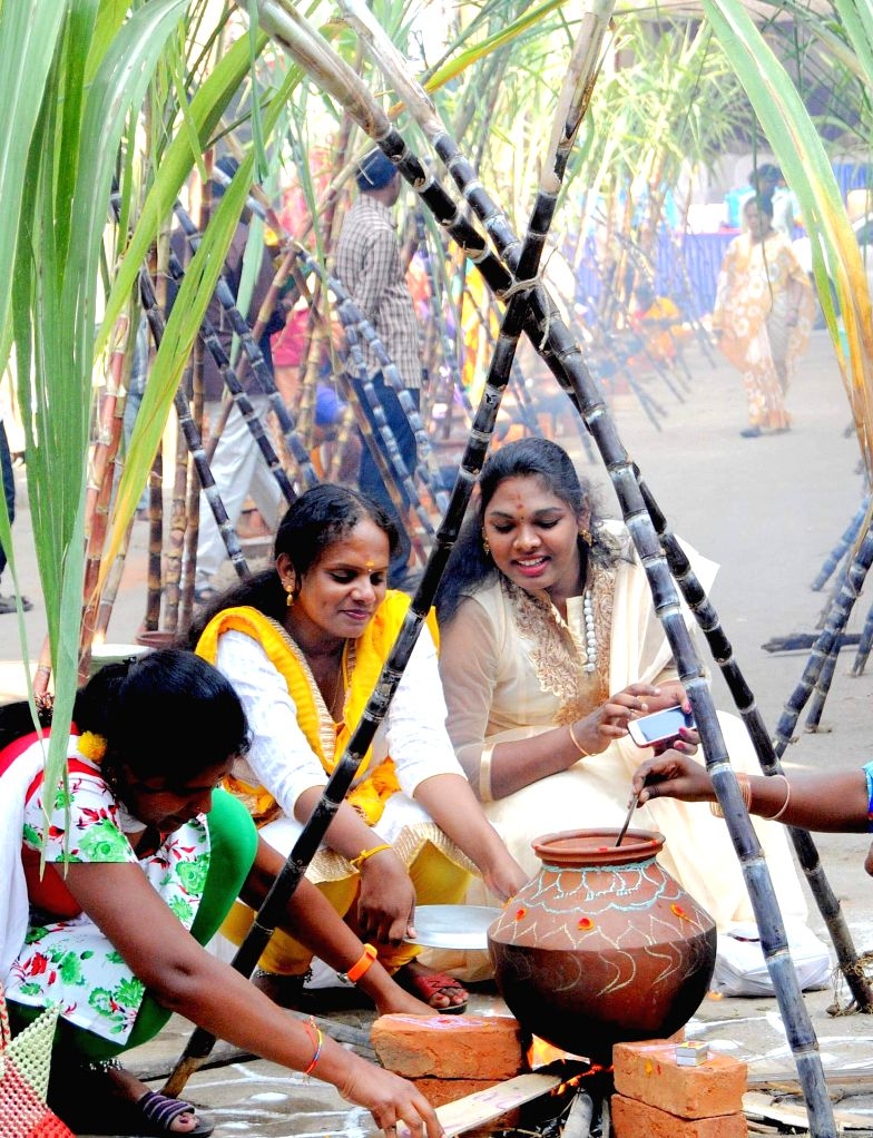 People celebrate Sankranti as they prepare Pongal - a popular rice dish, in Bengaluru on Jan 15, 2015.