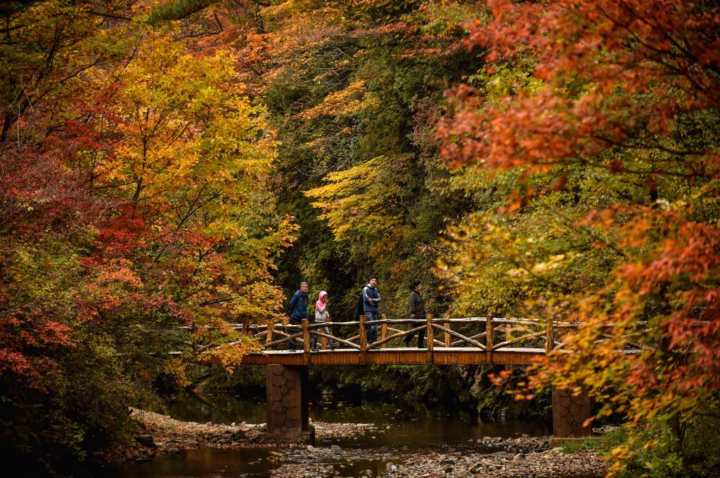 BENXI, Oct. 5, 2016 - Tourists view maple leaves at Dashihu park in Benxi, northeast China's Liaoning Province, Oct. 5, 2016, during the National Day holiday.