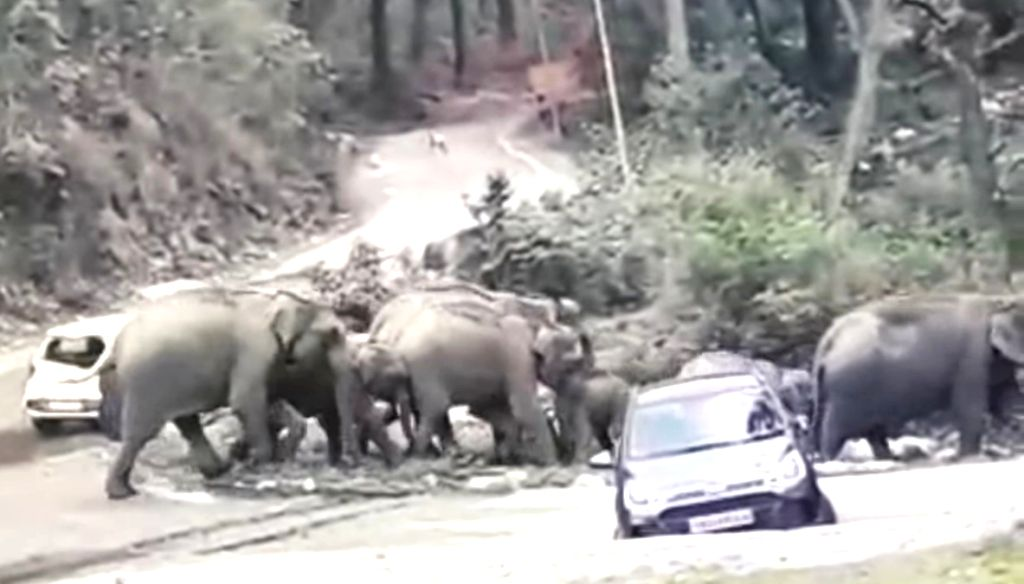 Bhakrakot: A video has gone viral in the social media where a herd of elephants are seen pushing two cars at Bhakrakot area, close to the CorbettTiger Reserve (CTR) in Uttarakhand. (Photo: IANS)