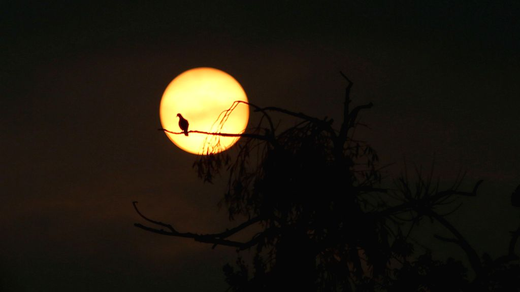 BHAKTAPUR, Oct. 8, 2019 - A bird rests on a tree branch at sunrise in Bhaktapur, Nepal, Oct. 8, 2019.