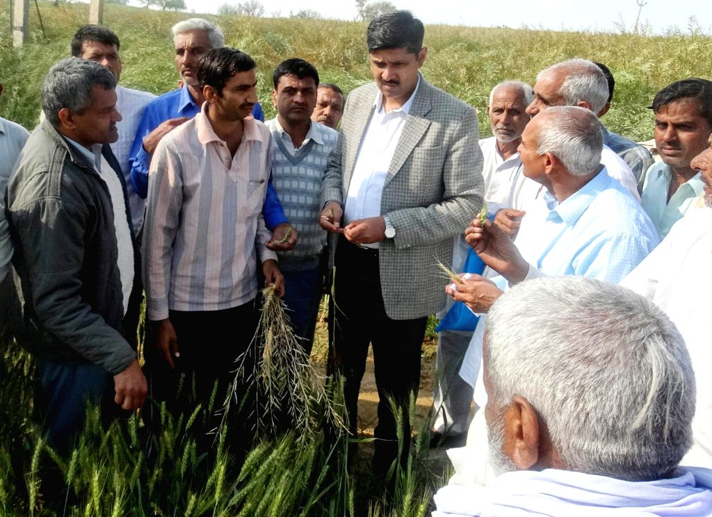 Bhiwani deputy commissioner Saket Kumar takes stock of the damage caused to the crops in the recent hailstorm in Bhiwani, Haryana on March 17, 2015. - Saket Kumar