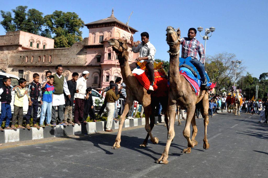 Camel race underway during the Jheel Mahotsav in Bhopal, on Feb 14, 2015.