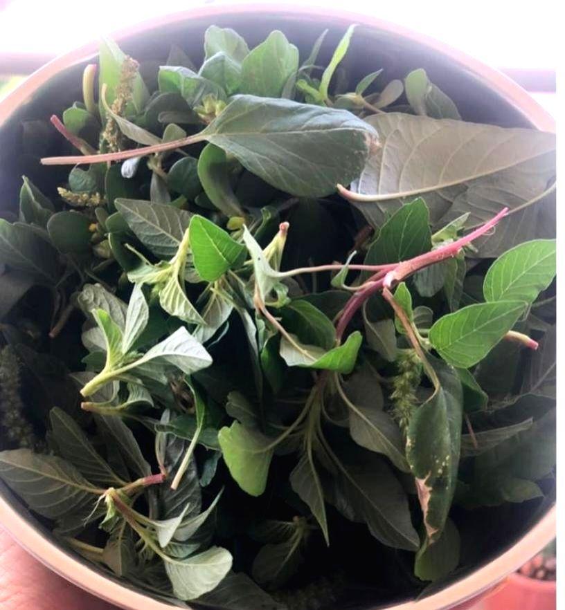 Bhumi Pednekar grows homegrown veggies and fruits.