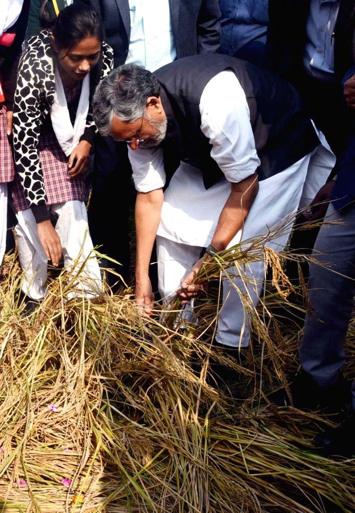 Bihar Deputy Chief Minister Sushil Kumar Modi during organic rice harvesting festival at Tarumitra in Patna on Dec 4, 2019. - Sushil Kumar Modi