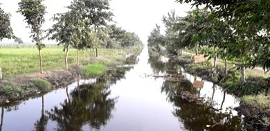 Bihar has a reputation for Hrpur Bochan Panchayat greenery