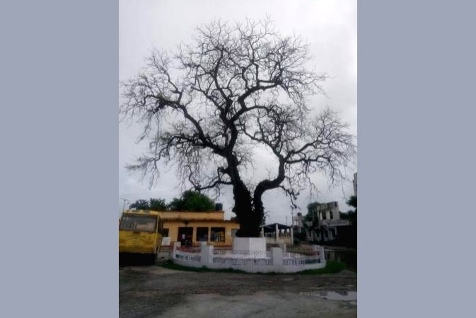 Bihar's Champaran has many memories associated with Mahatma Gandhi. One such memory is a neem tree in East Champaran district which is  associated with Gandhi's visit to the district. Situated at the Turakoulia Block office complex, about 10 km from