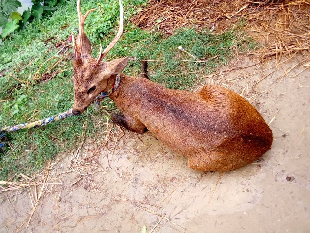 Bihar: Wild animals also flooded, deer are not able to recover fast.