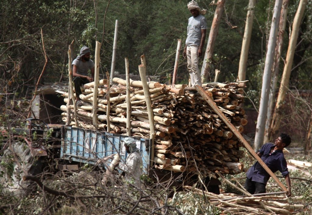 'Biodiversity at risk as forests cut down at alarming rates'
