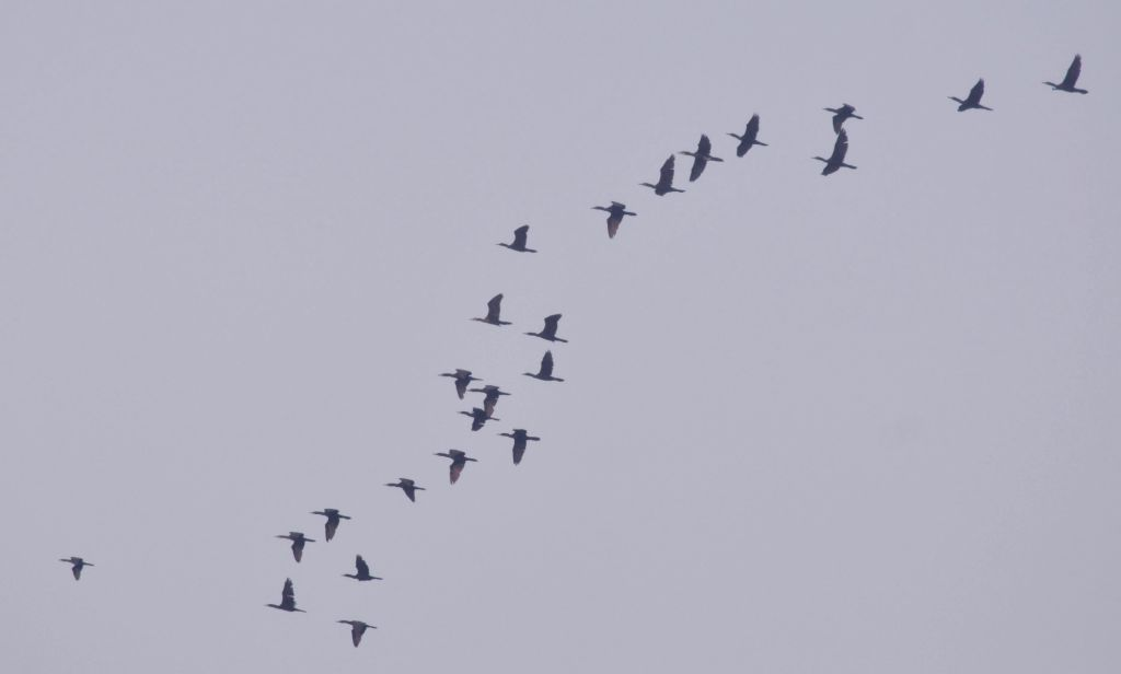 Birds fly in Kolkata skies on Jan 8, 2019.