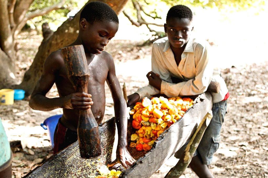 Boys smash cashew fruit for making cashew wine at the suburb of Bissau, capital of Guinea Bissau, April 16, 2014. Guinea Bissau is the fifth biggest country of ...