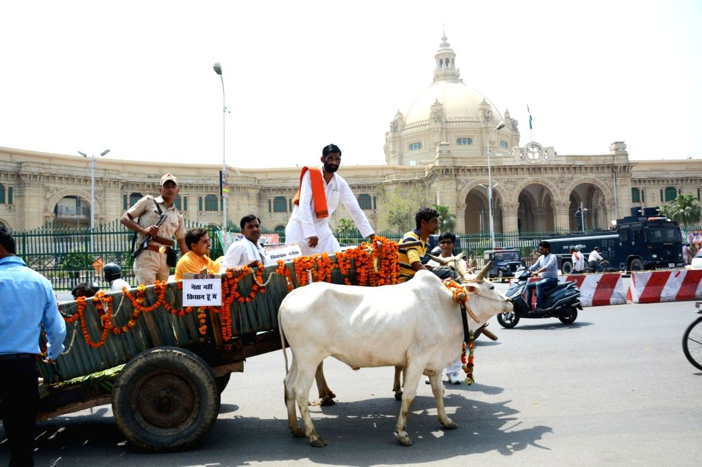 BJP MLA Jawahar Lal Rajpoot arrives to attend the first sitting of 17th Uttar Pradesh Assembly session in a bullock cart in Lucknow on May 15, 2017.