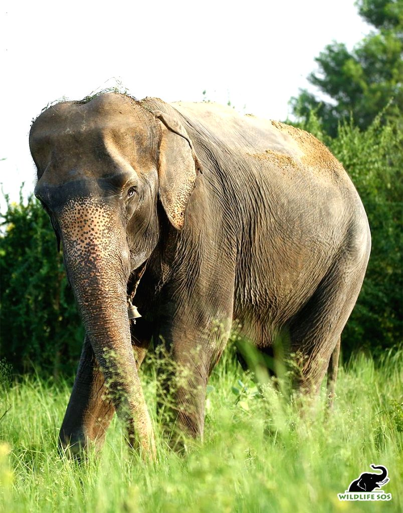 Blind elephant to get therapy in UP elephant hospital