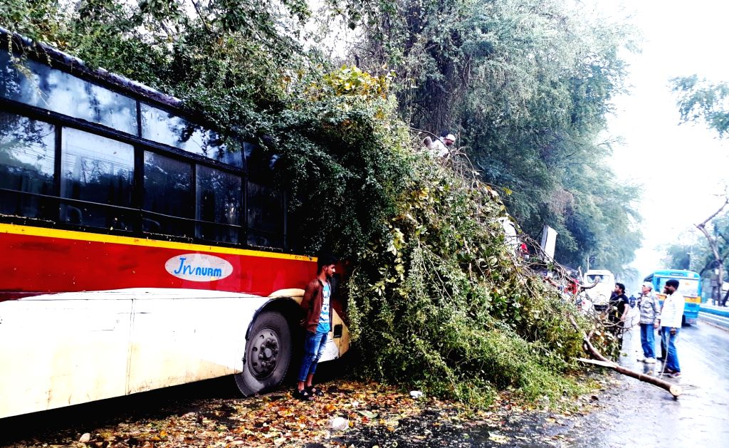 Branches of trees that fell on a tree during heavy rains and storm that hit Kolkata; on Feb 24, 2019.