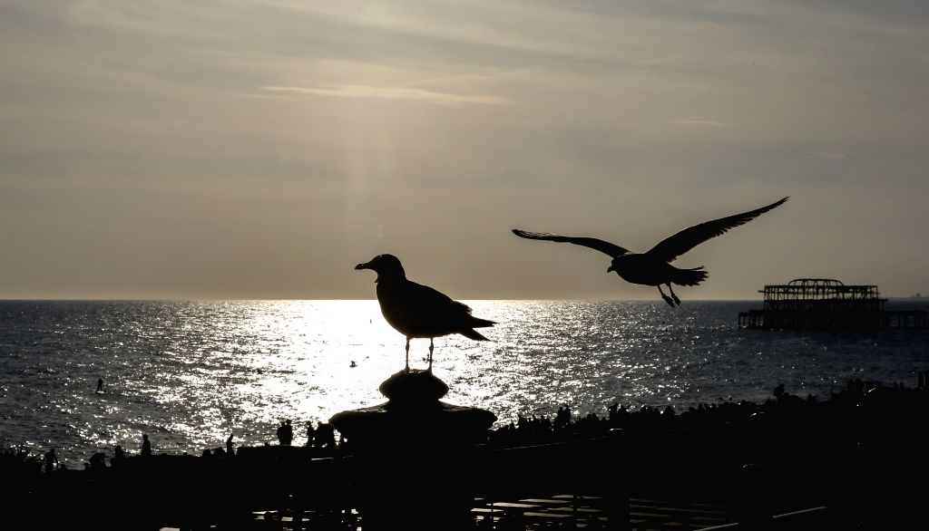 BRIGHTON, Sept. 22, 2019 - Seagulls are silhouetted at the beach of Brighton, Britain, on Sept. 21, 2019.