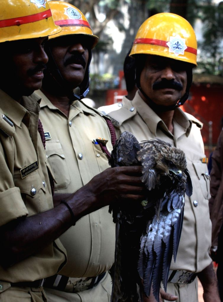 Bruhat Bengaluru Mahanagara Palike (BBMP) Forest Cell personnel with the eagle that was rescued from a tree where it was stuck at Cubbon Park in Bengaluru on Nov 28, 2017.