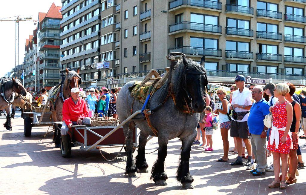 Shrimpers prepare to go shrimp fishing on horseback in Oostduinkerke, Belgium, Aug. 7, 2014. The shrimp fishing on horseback in Oostduinkerke has a history about ..