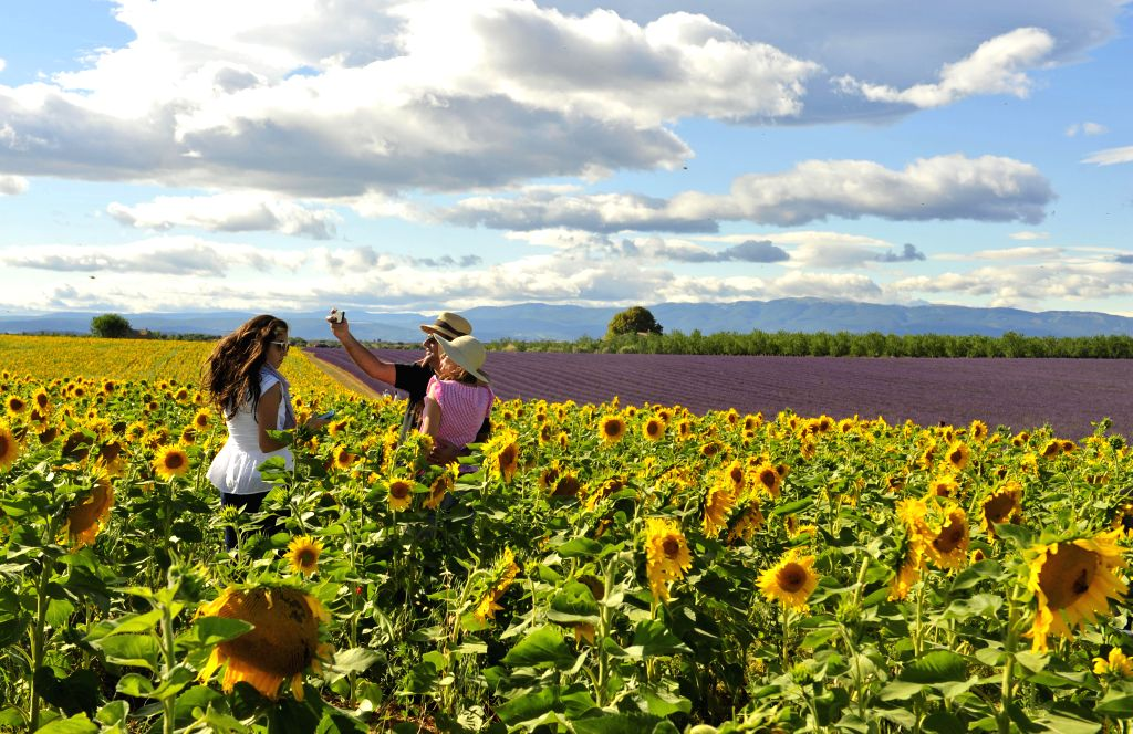 Photo taken on July 10, 2014 shows tourists take photos in sunflower field at Valensole of Provence, south of France.